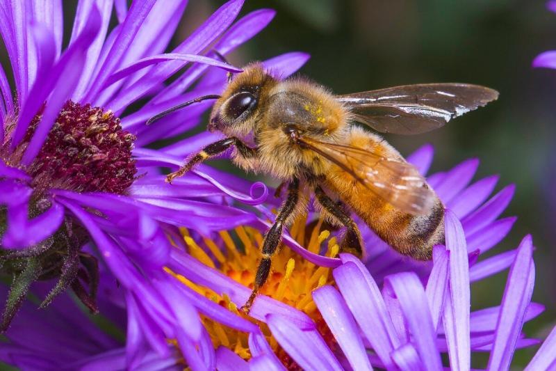 Беспроводные датчики и танцующие роботы: как ученые со всего мира спасают пчел
