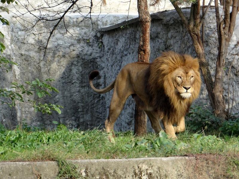Интересные факты о знаке зодика Львах