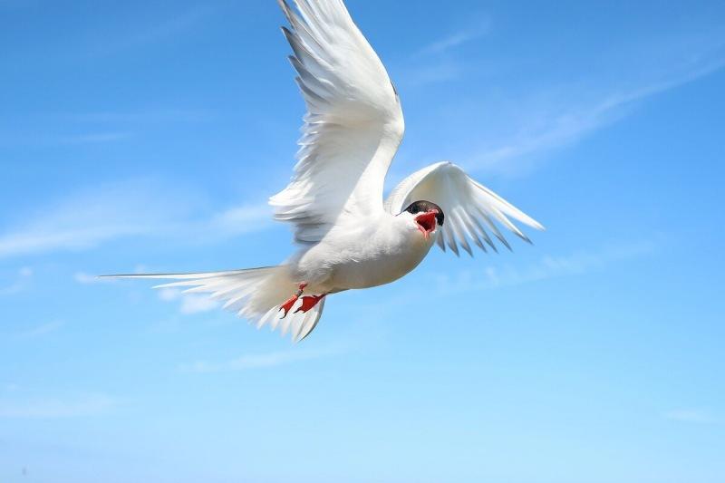 Интересные факты о перелетных перелетах птиц, дважды на Луну и обратно